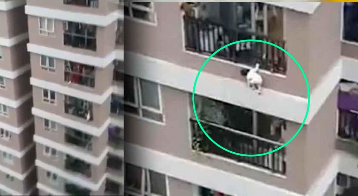Repartidor salva de la muerte a una niña de 3 años que cayó de una altura de 12 pisos