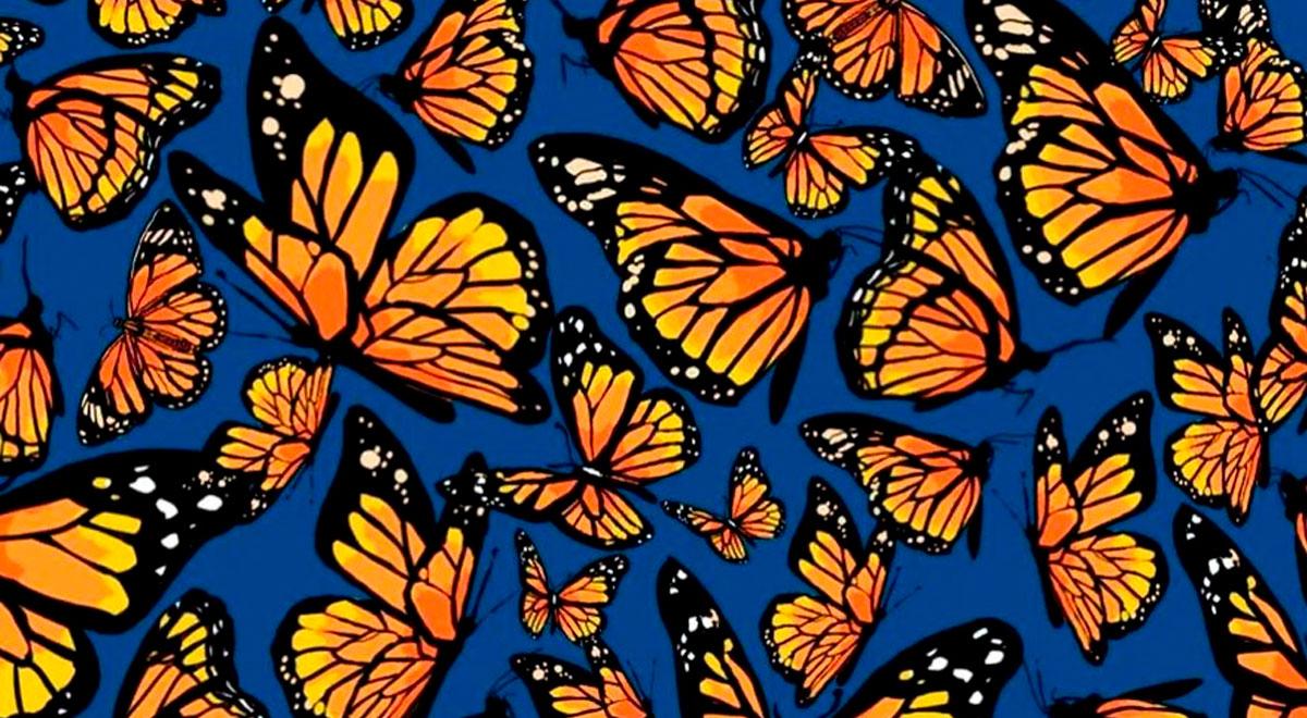 Reto viral: ¿puedes encontrar a las libélulas escondidas entre las mariposas? [FOTOS]