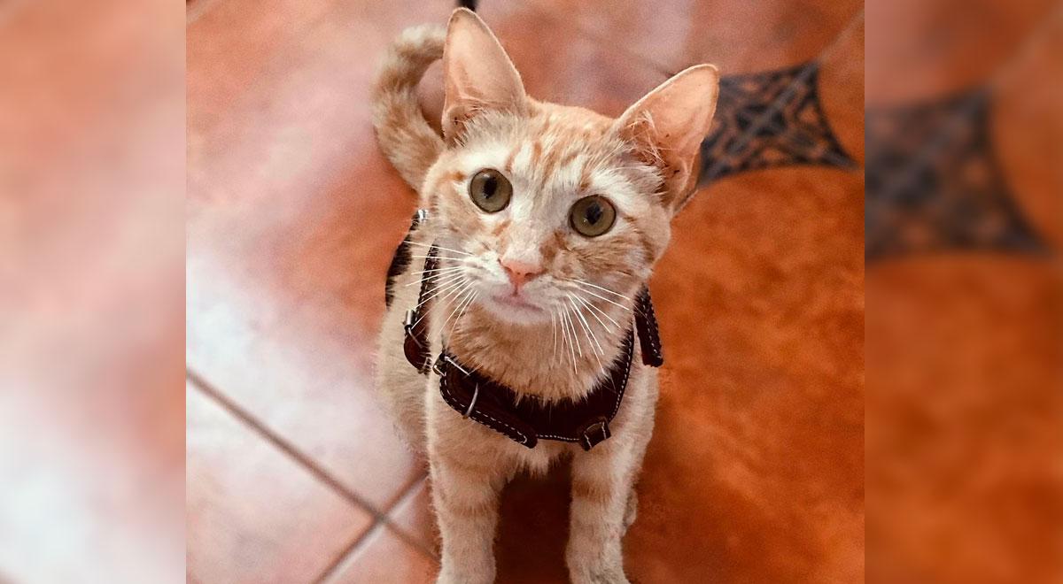 Denuncian que gatita fue abusada sexualmente por depravado sujeto en México