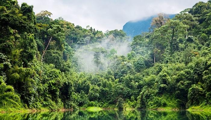 Día Internacional de los Bosques: el 70% de las plantas alimenticias del Perú proviene de los bosques amazónicos