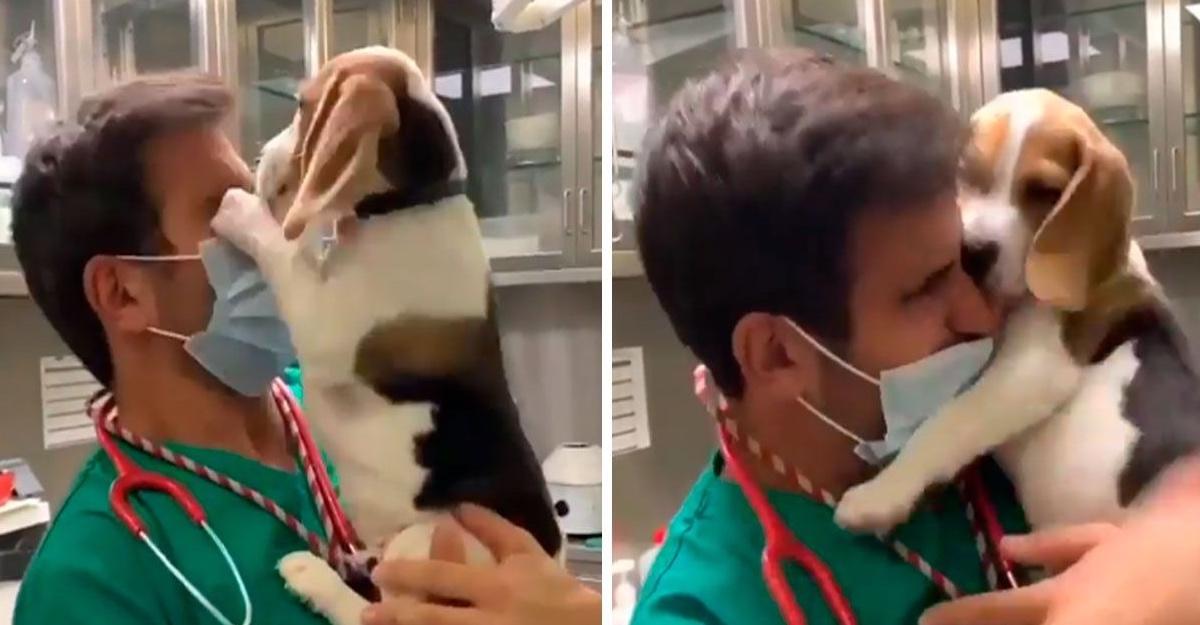 Perrito abraza y lame el rostro de su veterinario después de meses sin verlo por la pandemia