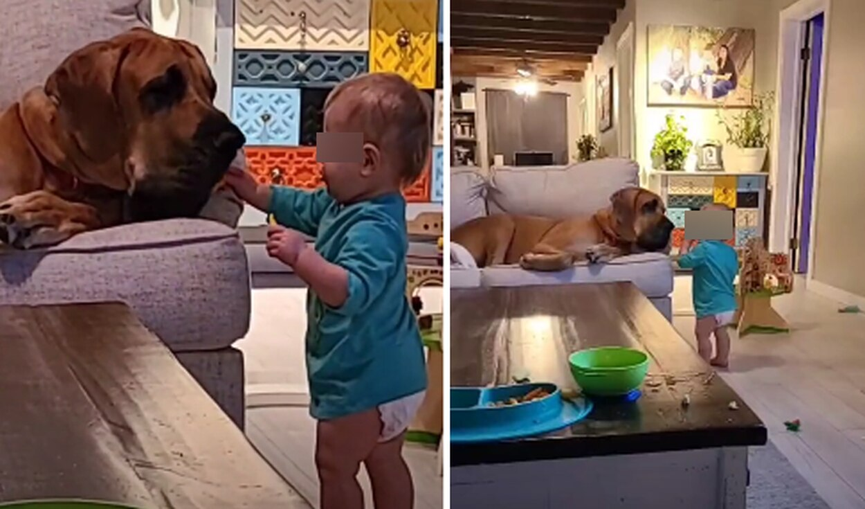 TikTok: Deja a su hijo con su mascota y cuando regresa los encuentra en una tierna escena