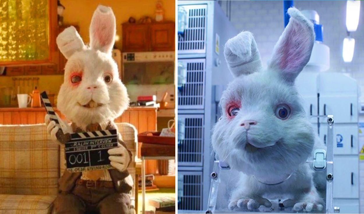"""""""Save Ralph"""", la campaña contra las pruebas cosméticas en animales que estremece al mundo"""