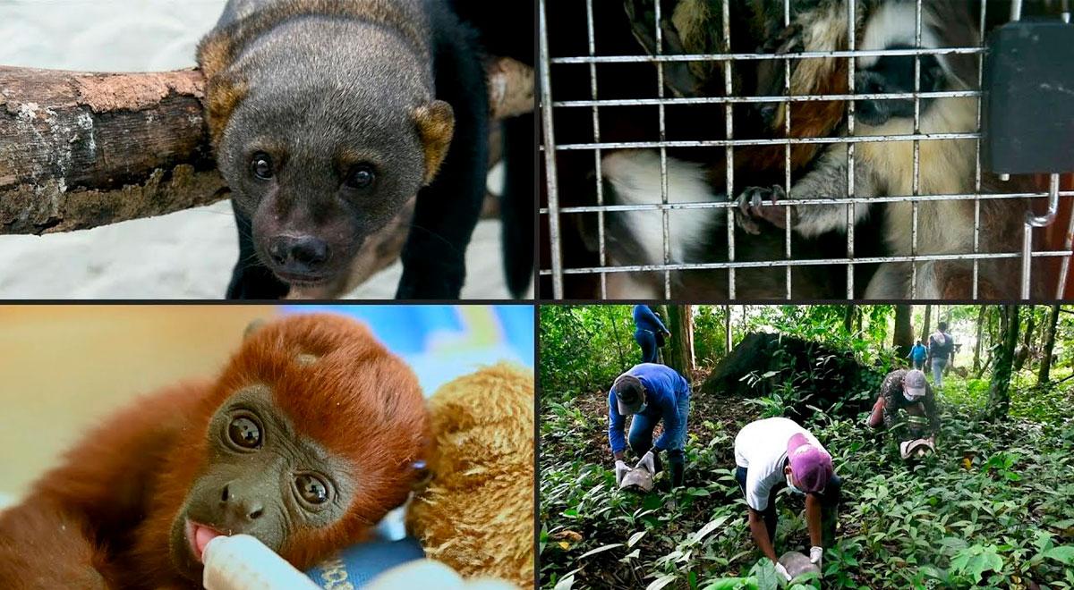 ¿Los animales silvestres son mascotas? Diana Ramos, veterinaria de la Municipalidad de Lima, responde [VIDEO]