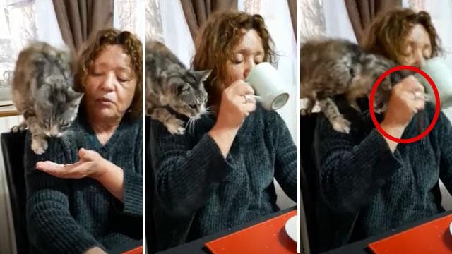 Gato se molesta con su dueña por no darle más comida y este 'se venga' de una singular manera [VIDEO]