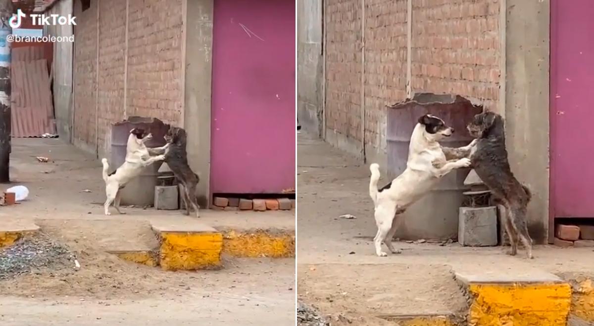 TikTok viral: perritos son captados bailando 'Tiempo de Vals' en plena calle