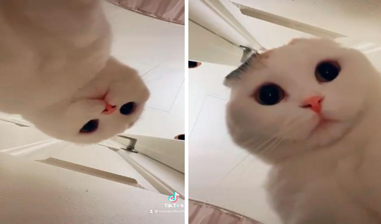 TikTok viral: joven revisa su celular y descubre que su gatito se grabó solo en su celular
