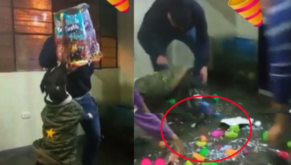 Festejan cumpleaños de su perro y este tiene singular reacción al momento de romper la piñata