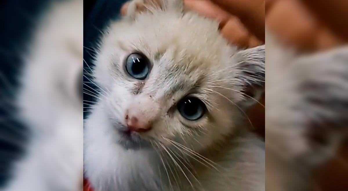 """Joven asiste a fiesta y termina adoptando un gatito: """"Mi nuevo amigo 'Pana Rabbit'"""" [VIDEO]"""