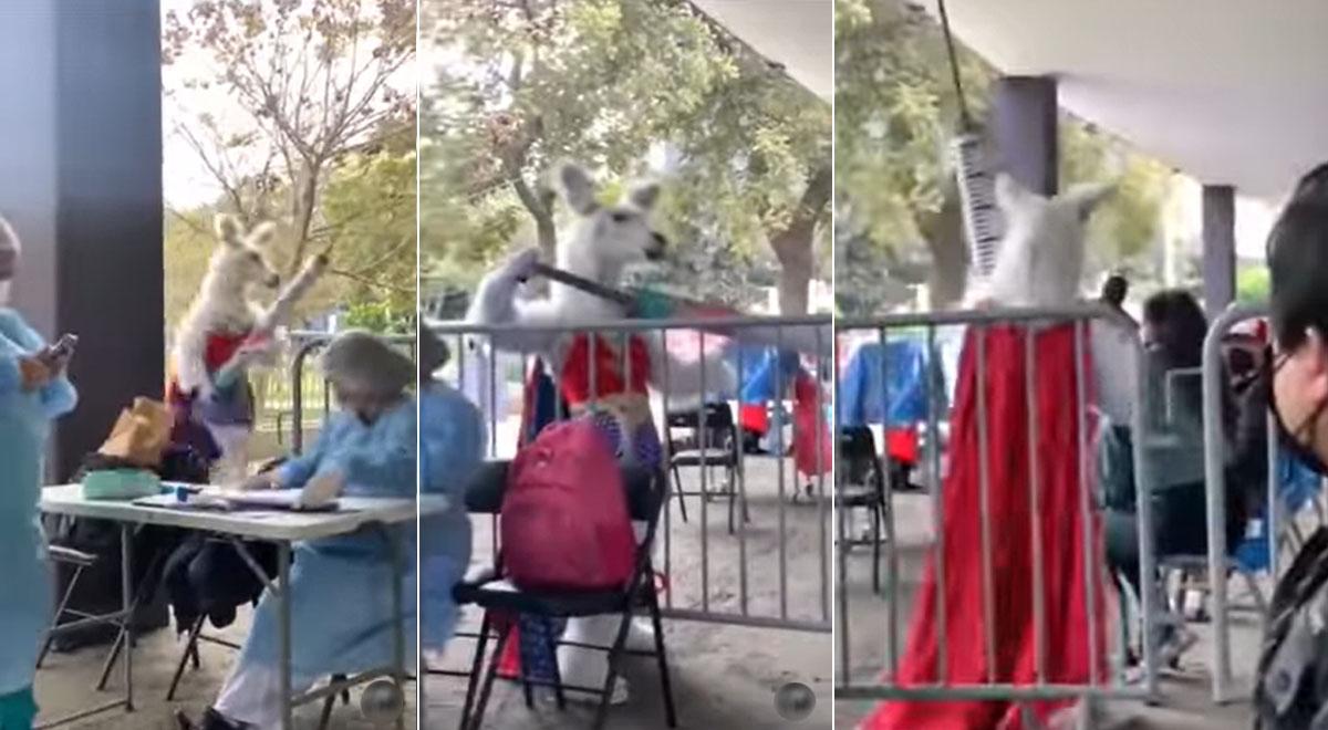 """""""Llama heroína"""" llegó al VacunaFest, 'aplicó dosis' a joven y divertida escena se hizo viral [VIDEO]"""