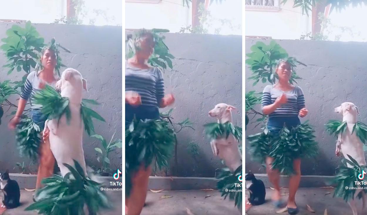 ¡La mejor pareja! Mujer y su perrito se disfrazan para bailar una coreografía de ensueño