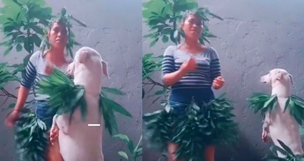Joven protagoniza singular coreografía junto a su perrito y la rompen en TikTok