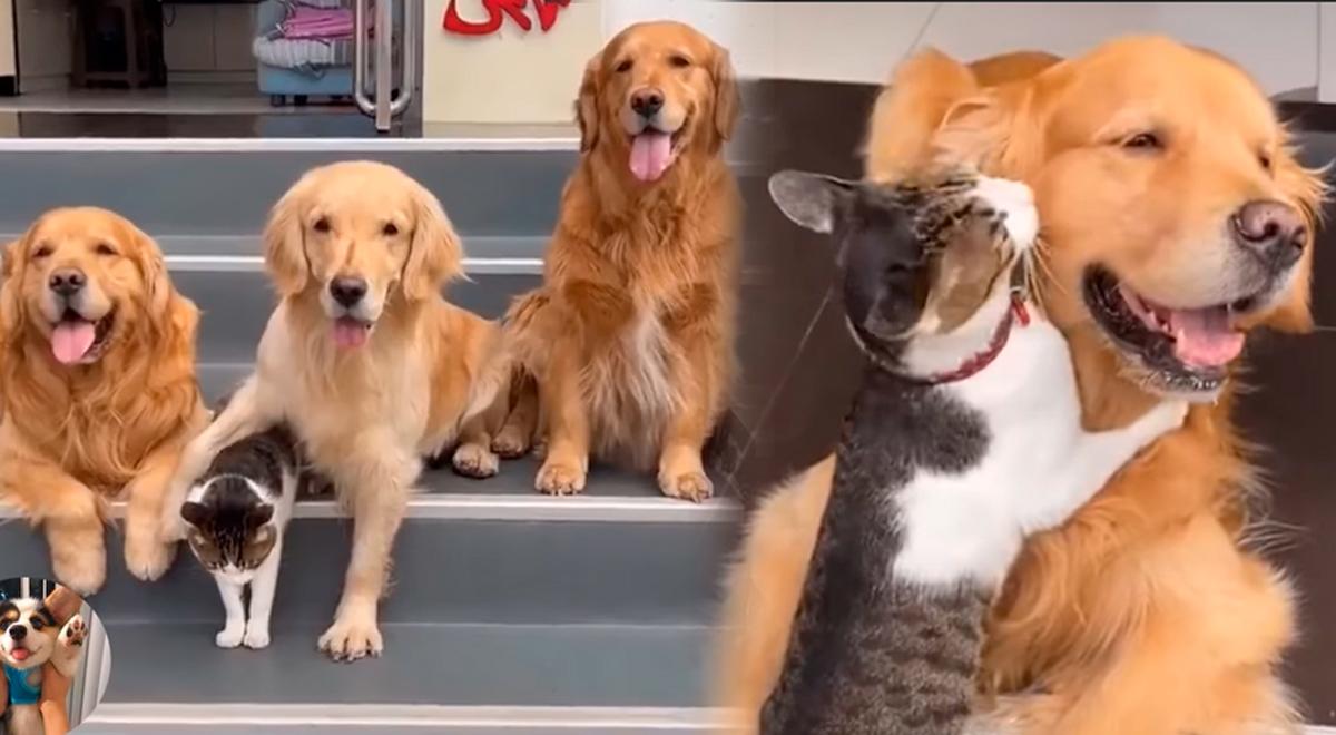Gatito es el engreído de tres perros y así lo demuestran a diario