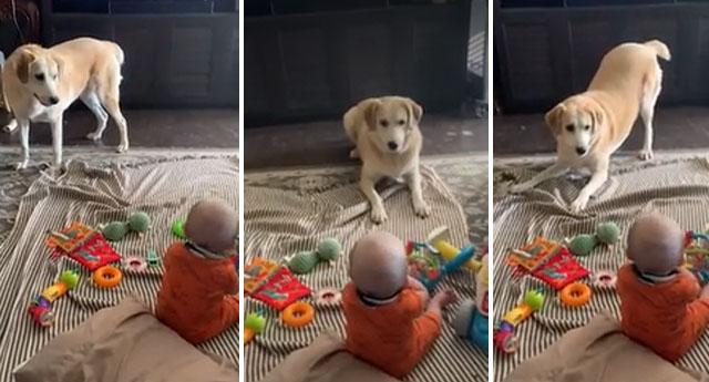 Perrito cuida a un bebé mientras su dueña no está y lo 'entretiene' para evitar que llore