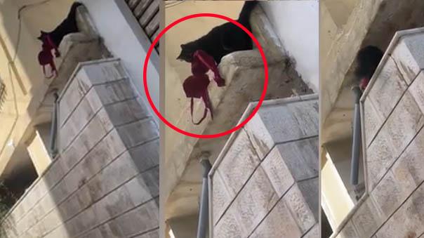 Gatita 'roba' el sujetador de una desconocida y lo trae hasta la vivienda de su dueña