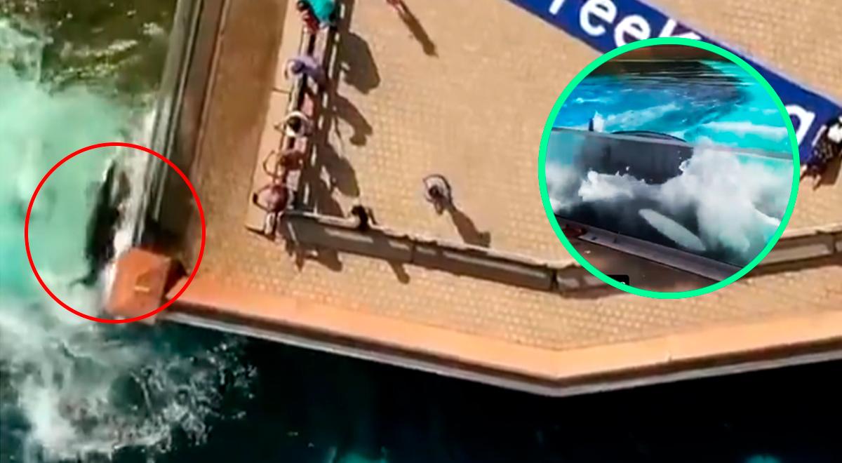 """Piden libertad para """"la orca más solitaria del mundo"""" que lucha por salir del acuario"""