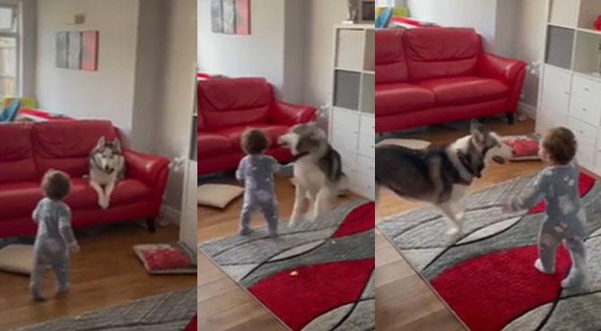 ¡El mejor niñero! Perrito cuida a bebé de su dueña y se divierte con él de una singular manera