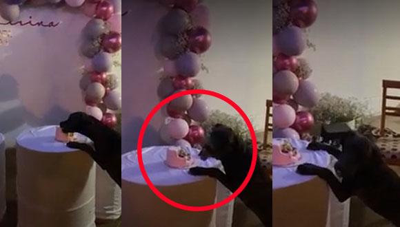 Perrito aprovecha descuido de sus dueños para comer un pedazo de pastel, pero al final es descubierto